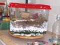 cactus-tank
