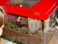 cactus-tank1